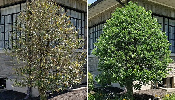TreeDrench-Before&After-2